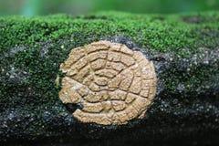 Rockowy poręcz zakrywający z plantsat Nunobiki spadkiem fotografia stock