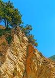 rockowy sosny drzewo Obrazy Stock