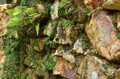Rockowy weall Obrazy Stock