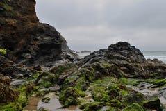 Rockpölar och seaweed royaltyfria bilder