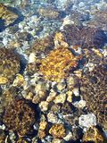 Rockpool Royalty Free Stock Image