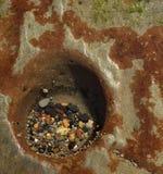 Rockpoolinzameling Stock Foto