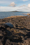 Rockpools on volcanic rocks Royalty Free Stock Images