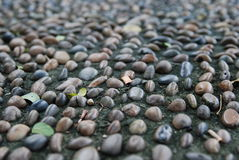Rocks. A mosaic of rocks buried in the ground - Rocky Road Stock Photography