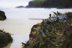 Rocks. On the beach of Santa Comba in the Galician coast , Atlantic Ocean, Spain Royalty Free Stock Photo