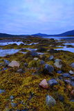 Rocks and algae. At midnight in the lofoten islands (norway) during summer Stock Photography
