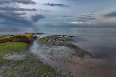 Rocks with algae Royalty Free Stock Photo