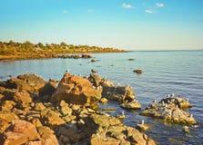 Rocks ans Seagulls in the Coast of Piriapolis Stock Photos