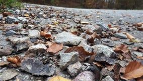 Rocks in autnum royalty free stock photos