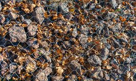 Rocks and autumn dry leaves under wire background Stock Image