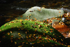Rocks in autumn river. Rocks, plain and covered with moss in a river in the autumn Stock Image