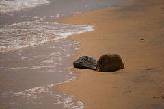 Rocks on the Beach. In the tide stock image
