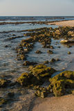 Rocks on the beach. Moldy rock formations emerging from the water at sunset. Caesarea beach, Israel Stock Image