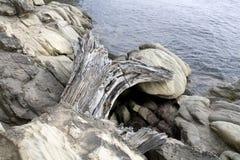 Rocks on Beach. Unique Rocks on beach at Larrabee State Park Bellingham, Washington State, US Stock Image