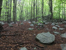 Rocks in a beech forest. Royalty Free Stock Image