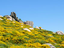 Rocks and blooming flowers in the Cevennes mountains in France Royalty Free Stock Photo