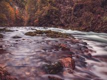 Rocks on Body of Water Beside Forest Royalty Free Stock Photo