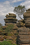 The Rocks at Brimham. Brimham Rocks in Yorkshire, England are composed of millstone grit and were sulptured by erosion during the last ice age Royalty Free Stock Images