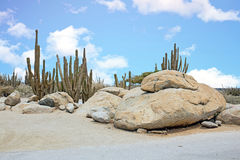 Rocks and Cactus plants in the cunucu on Aruba island Royalty Free Stock Photography