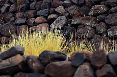 Rocks and coarse grass. Rocks and coarse yellow grass growing in between royalty free stock image
