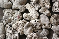 Rocks and corals Royalty Free Stock Photo