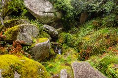 Rocks covered by green moss in the Peneda geres National Park forest, north of Portugal.  stock images