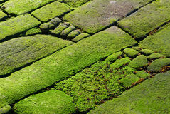Free Rocks Covered In Green Algae Stock Photography - 15326152