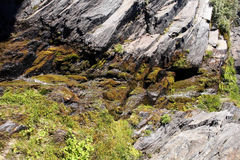 Rocks covered with lichens Norway Royalty Free Stock Images