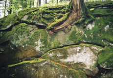 Rocks covered with a moss. Royalty Free Stock Images