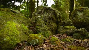 Rocks covered in moss in the forest. Moss covered rocks in the forest at the Scenic Rim, Queensland, Australia stock video footage