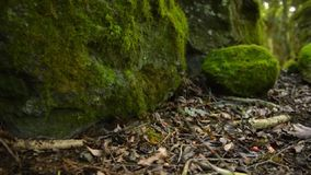 Rocks covered in moss in the forest. Moss covered rocks in the forest at the Scenic Rim, Queensland, Australia stock footage