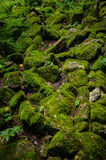 Rocks covered in moss Stock Images