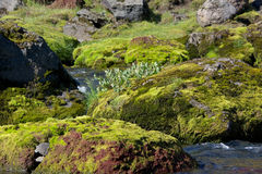 Rocks covered with moss in a mountain river, Iceland Royalty Free Stock Photo