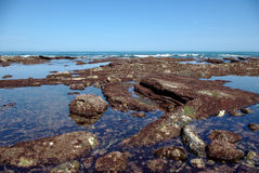 Rocks covered with red algae on the Atlantic coast. Panorama at low tide of rocks covered with red algae on the French Atlantic coast royalty free stock photos