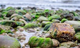 Rocks covered in seaweed by the beach in denmark. Northern Zealand Royalty Free Stock Images