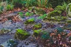 Rocks covered in vibrant green moss. Shot at shallow depth of field at the park in Dublin, ireland Royalty Free Stock Images