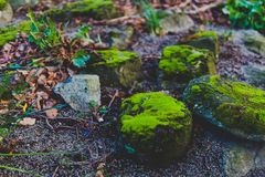 Rocks covered in vibrant green moss. Shot at shallow depth of field at the park in Dublin, ireland Royalty Free Stock Photos