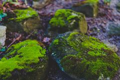 Rocks covered in vibrant green moss. Shot at shallow depth of field at the park in Dublin, ireland Stock Image