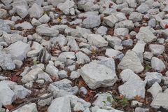 Rocks Covering the Ground of a Forest Royalty Free Stock Image