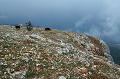 Rocks in Crimea (Ukraine) Stock Photo