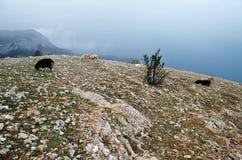 Rocks in Crimea (Ukraine) Royalty Free Stock Image