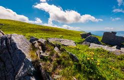 Rocks and dandelions on the grassy hillside. Peak of Runa mountain in the distance. beautiful summer landscape under the blue sky with clouds Stock Photo