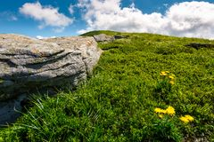 Rocks and dandelions on grassy hillside. Lovely summer nature scenery in mountain under the blue sky with some clouds Stock Image