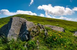 Rocks and dandelions on grassy hillside. Lovely summer nature scenery in mountain under the blue sky with some clouds Royalty Free Stock Photography