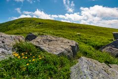Rocks and dandelions on grassy hillside. Lovely summer nature scenery in mountain under the blue sky with some clouds Stock Photography