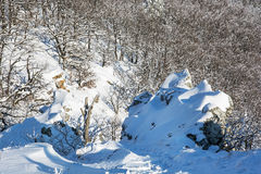 Rocks and deciduous forest in winter Stock Image