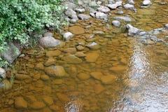 Rocks doppade i krusbärfloden Royaltyfria Bilder