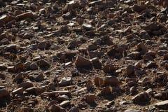Rocks on a dry field Stock Image