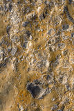 Rocks with embeded fossils in  Royalty Free Stock Images