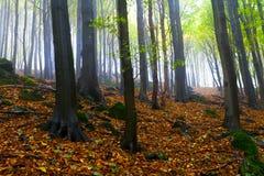 rocks för härlig skog för höst dimmiga Fotografering för Bildbyråer